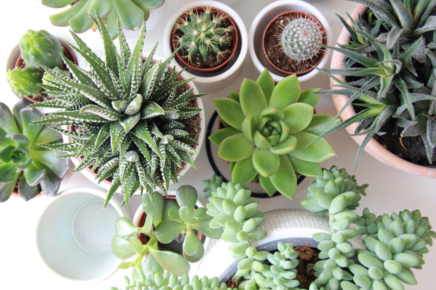 Succulent - beginners guide to houseplants